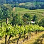Adelaide Hills Day Tour